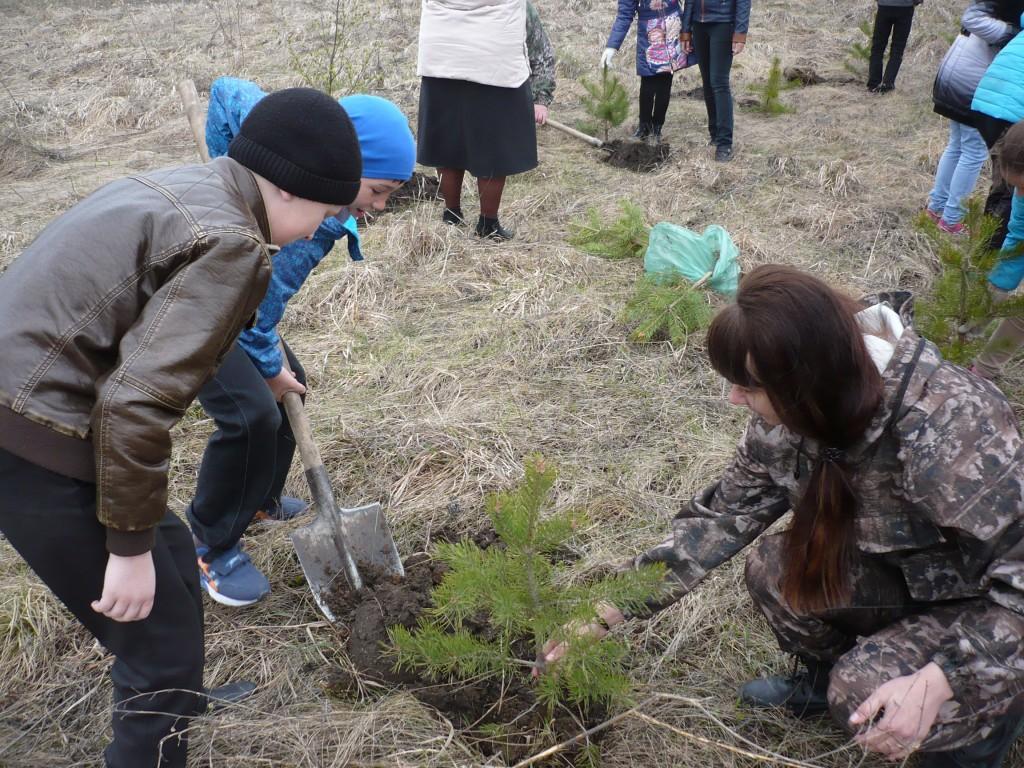 В Год экологии в Кузбассе планируется посадить рекордные 7,5 млн деревьев